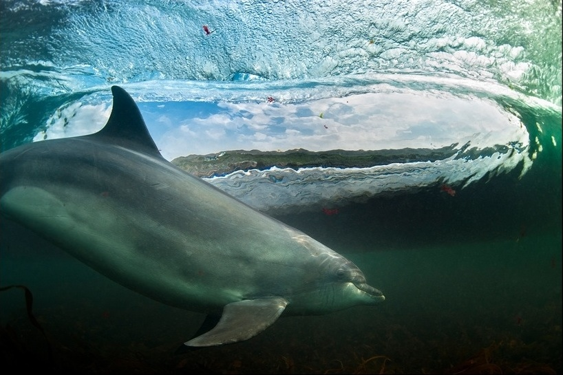 Dolphin-wildlife-photo-winner
